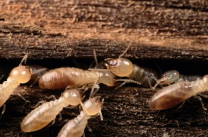 signs-of-termites-2